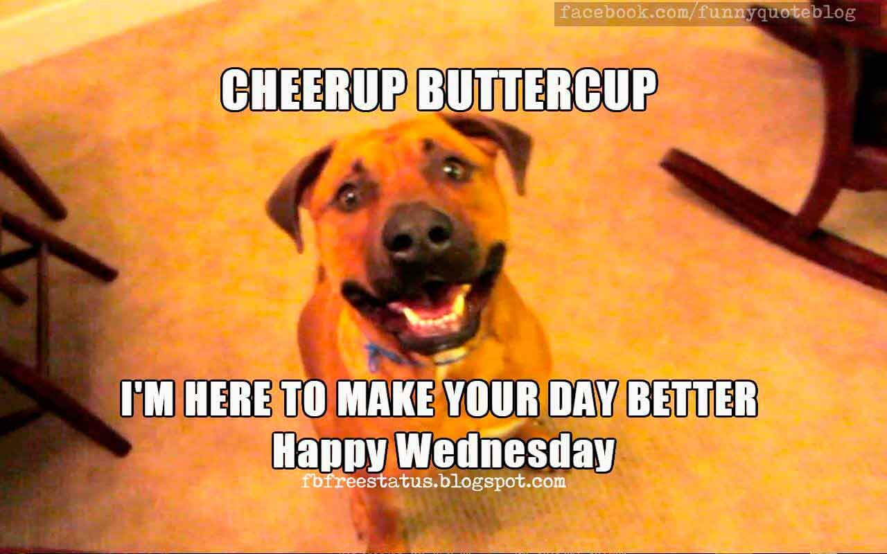 It's Wednesday, Funny & Happy Wednesday Meme with ... - photo#29