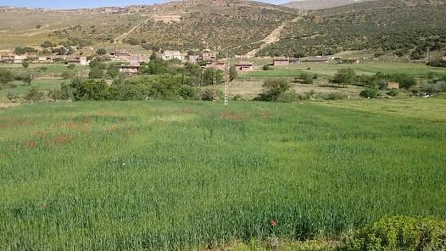 أصل ومعنى إسم  قرية أبعلي Abe3li - Baâli  بولاية باتنة بالجزائر