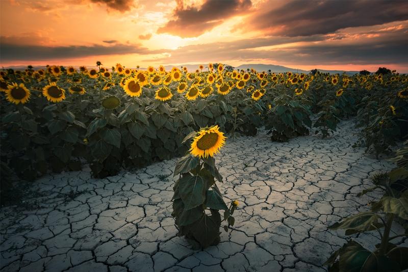 Anadolu'nun 4 Mevsimi Fotoğraf Yarışması