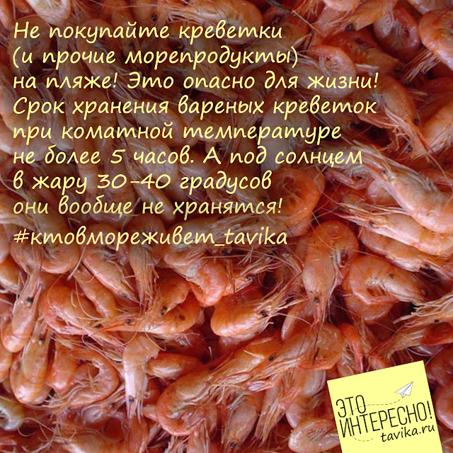 черноморские креветки