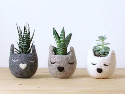 decoraconmaría: plantas de interior y otras