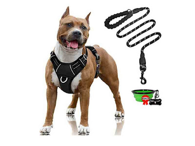 Harness, collar, identification tag, and leash