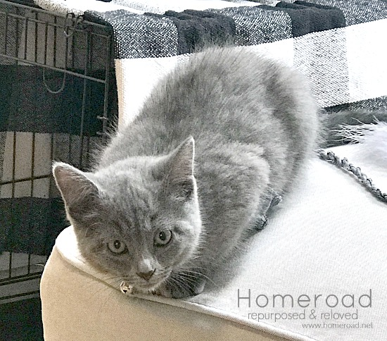 Grey kittens and DIY cat projects that match my neutral farmhouse home
