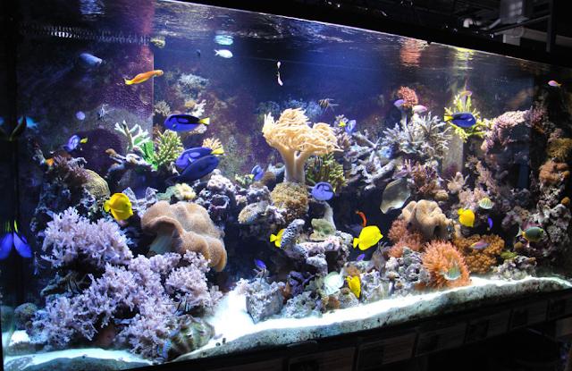 Cara Mudah Merawat ikan Hias Air Laut