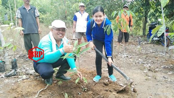 Program Pemkab Bartim Untuk Pemberdayaan Tanaman Kakao Terlaksana Di Desa Bangkirayen