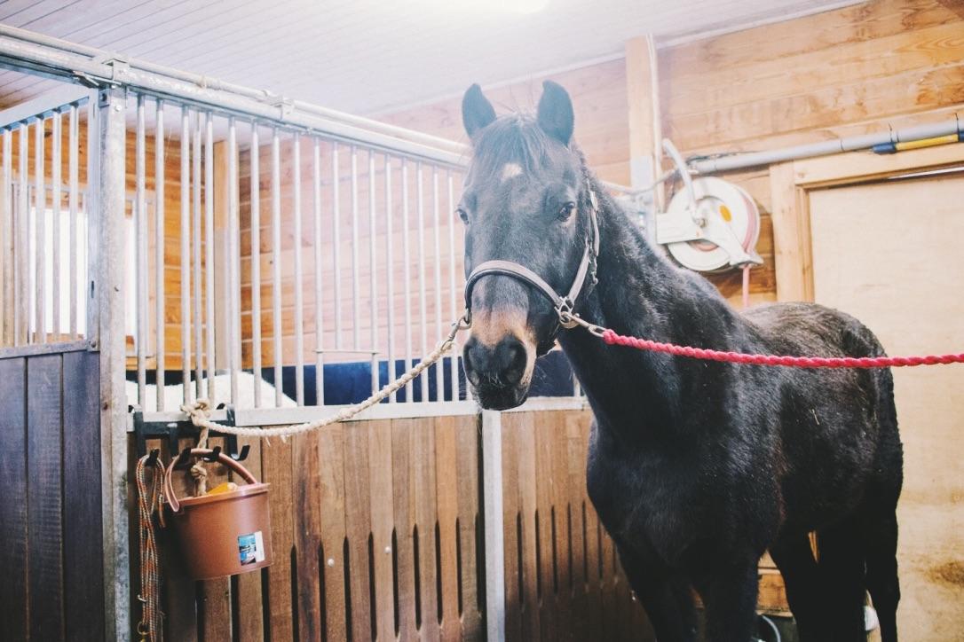 Annetaan Hevonen Loppuelämän Kotiin