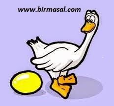 altin yumurtlayan kaz masali