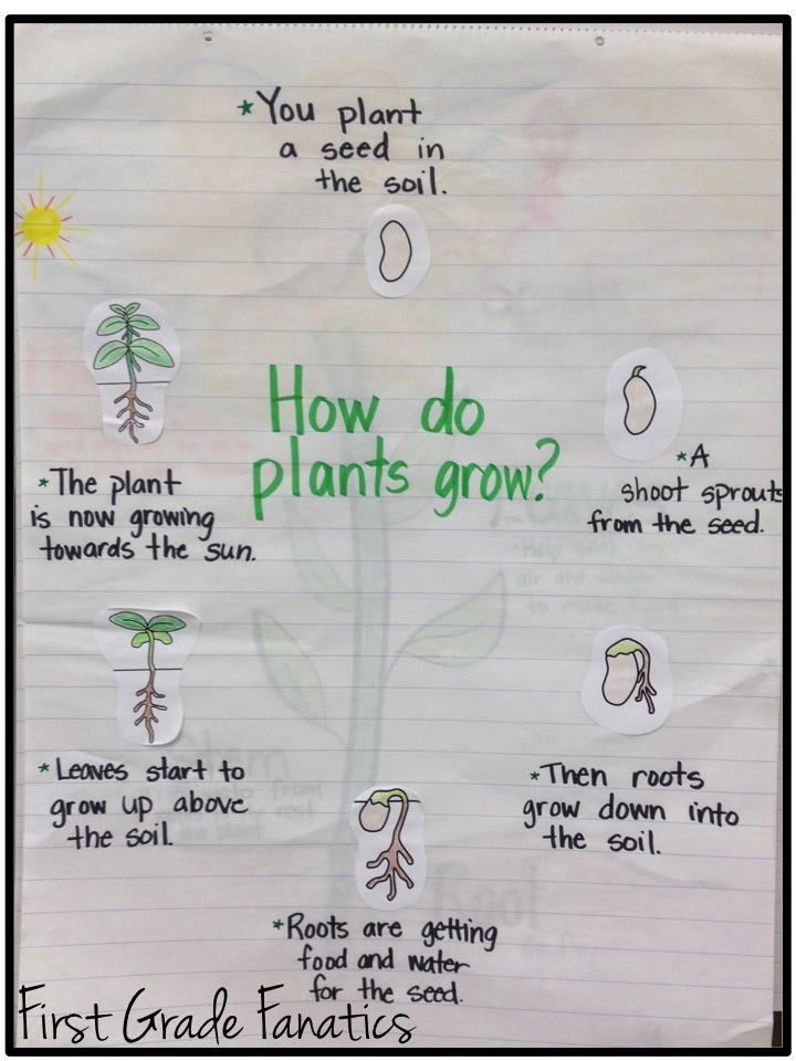 First Grade Fanatics Plant Life Cycles