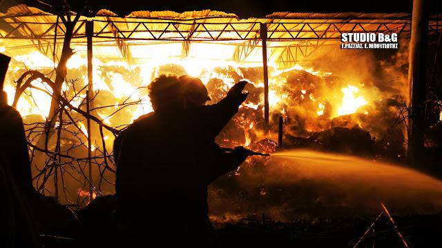 Αργολίδα: Καταστροφική η πυρκαγιά σε μονάδα εκτροφής βοοειδών