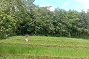 Bertani Alami, Berawal dari Secangkir kopi dan Sebatang Rokok