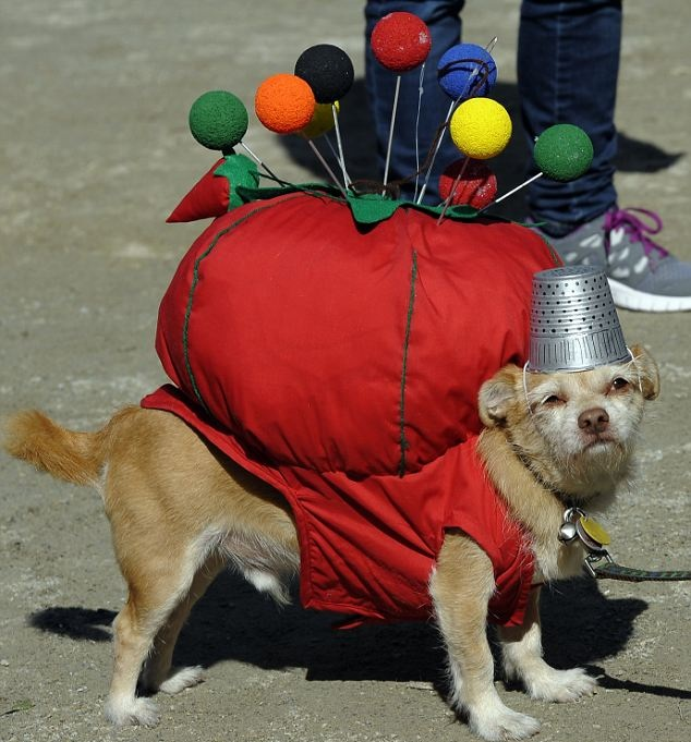 Homemade Dog Costumes For People