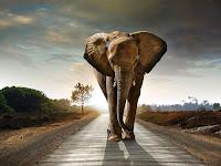 Fillerin Dünyası