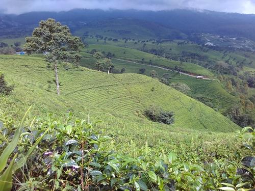 kebun teh kemuning karanganyar