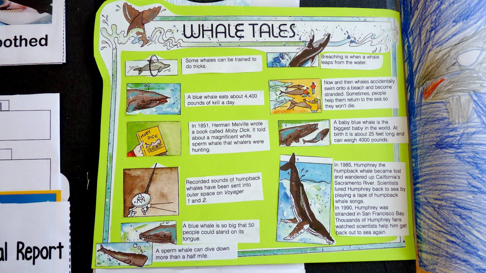 Homeschooling Reconstruction The Whale Lapbook