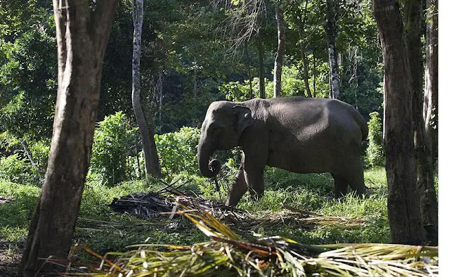 2. Laos, the Land of a Million Elephants