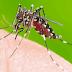 Informe semanal da dengue registra 2.056 novos casos e mais um óbito no Paraná