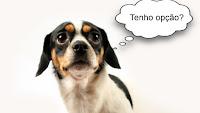 Há quem diga que a castração é um ato de amor e cuidado com a saúde do animal. Mas há também os que optam por evitar a cirurgia, por achá-la desnecessária, mutiladora e traumática.
