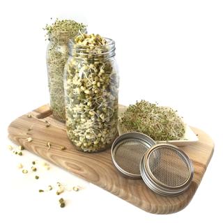 sprouting-jar-blog_001.png