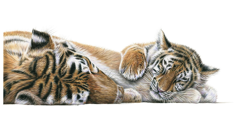 04-Mother-and-cub-Tiger-Richard-Symonds-Wildlife-Fine-Art-Drawings-a-Painting-and-a-Video-www-designstack-co