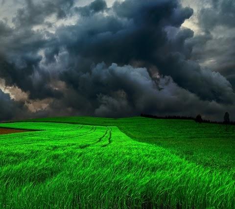 Mây Đen Trên Đồng Lúa