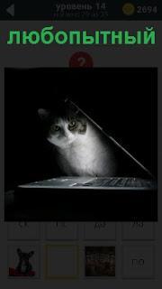 Любопытная кошка выглядывает из под крышки ноутбука, который стоит на столе в рабочем состоянии