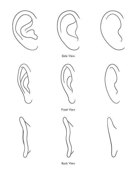 Gambar Telinga : gambar, telinga, Gambar, Telinga, Hitam, Putih