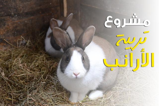 دراسه جدوي فكرة مشروع تربيه الأرانب فى المنزل 2018