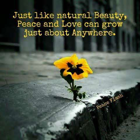 Natural Beauty Quotes Tumblr With Images 1