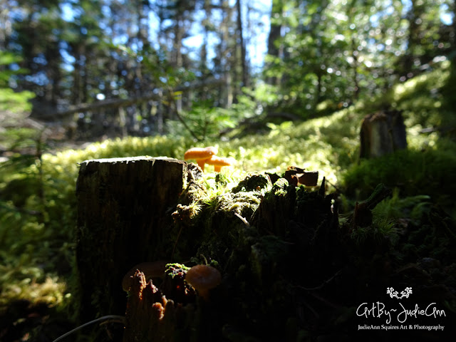 Mushrooms of Newfoundland
