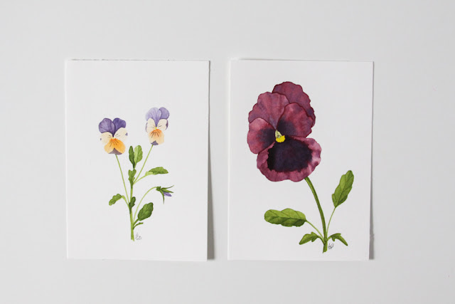 violas, pansies, watercolor, botanical painting, Anne Butera, My Giant Strawberry