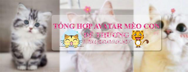 Tổng hợp Avatar mèo con dễ thương