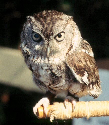 But Cartoon Owls Are So Cute Aren T They
