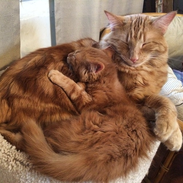 Cat Finds His Mini-Me, Decides To Adopt Him And Raise As His Own