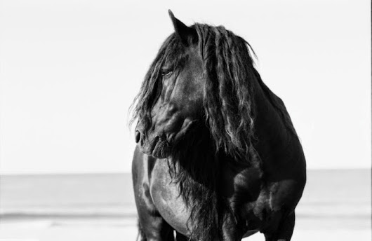 The Rancher's Daughter: The Wild Horses of Sable Island