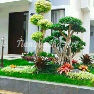 pohon yang cocok untuk dibuat taman