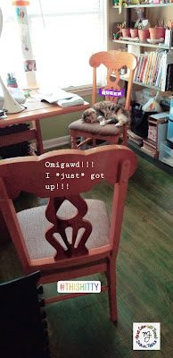 A cat is asleep on her owner's chair, even though there is a matching chair in the middle of the room just for her.