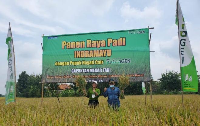 Tingkatkan Produksi Hasil Pertanian dengan Pupuk Organic Cair ExtraGEN