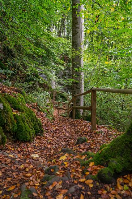 Westerwaldsteig Etappe 1 | Von Herborn nach Breitscheid | Tierpark Herborn | Herbstlabyrinth Erdbach 24