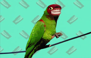 Birds don't have teeth either, but they have beaks. Sesame Street Elmo's World Teeth Quiz