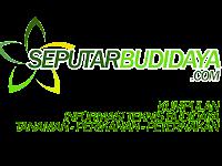 Blog Seputar Budidaya