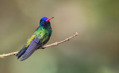 Juan Jose Arango fotografo de colombia aves