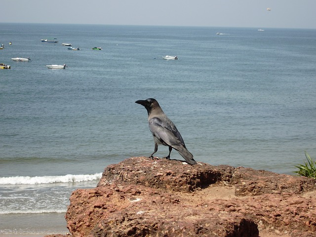 Anjuna beach is a rocky beach, and also narrow in some places. The southern part of the beach consists of golden sand. Anjuna beach is one of the first Goa beaches to get international fame. Baga beach is 6.9 kilometers away from Anjuna beach. Anjuna beach is close to other popular beaches of North Goa. Anjuna beach is known for trance parties as well as rave parties, full-moon parties in the peak season. Every Wednesday, the biggest and most popular flea market in Goa is held there.