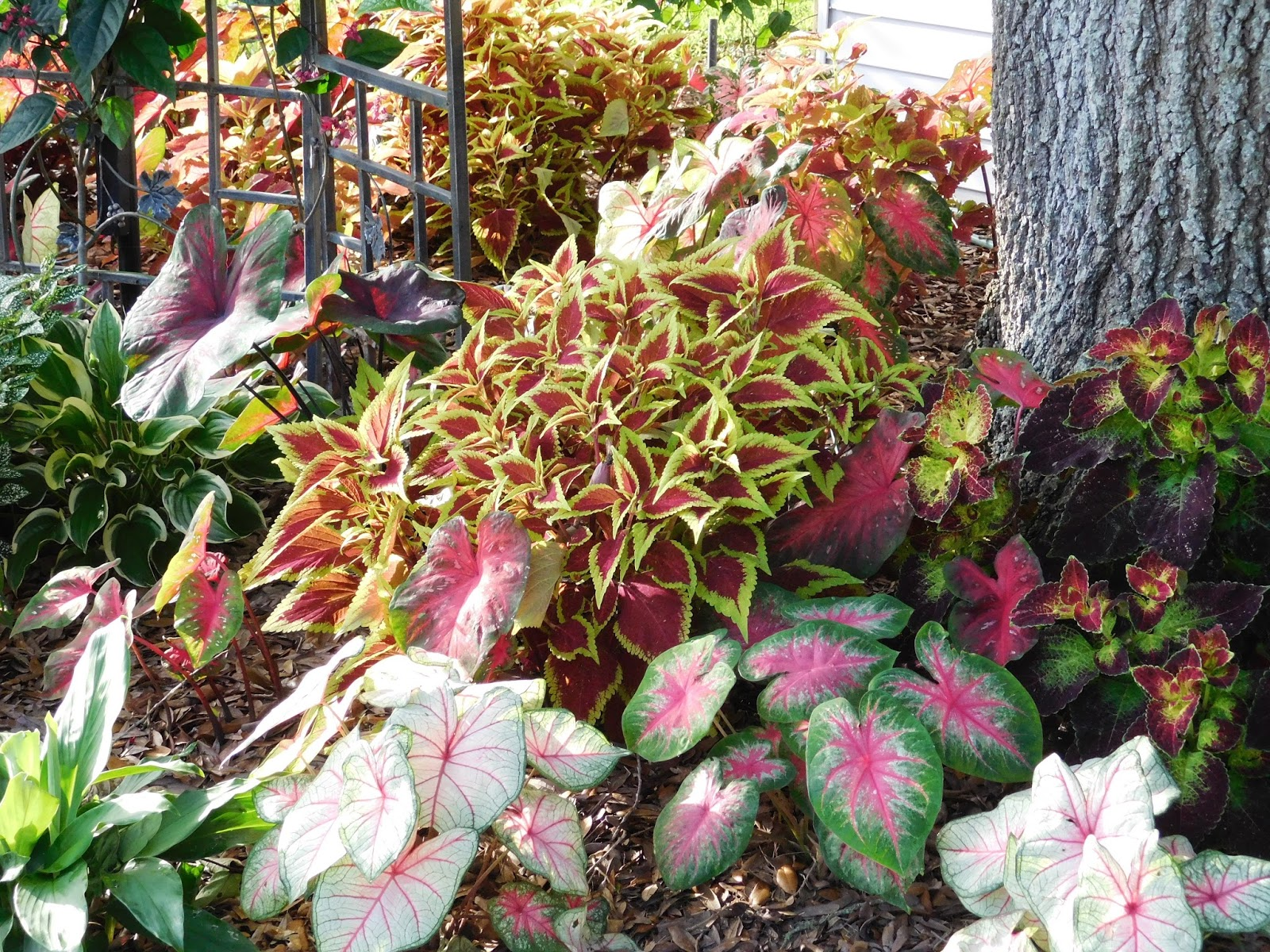 Colorful Florida Gardening Festooning - Brown Nature Garden ...