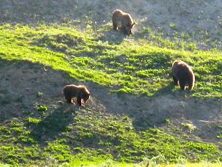 Wildlife Wonders in Yellowstone and Grand Teton