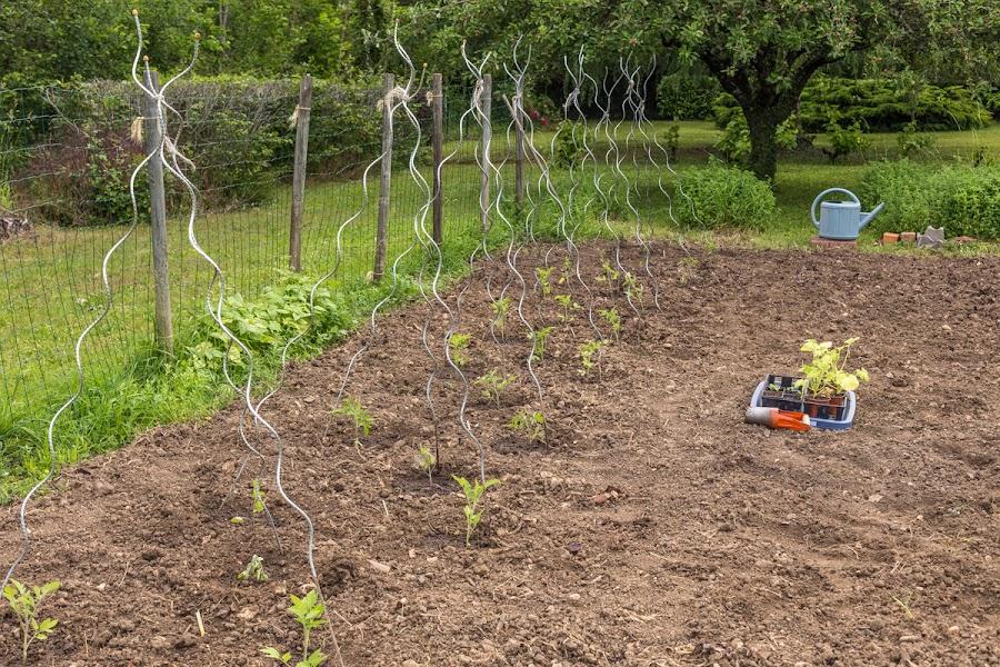 Vegetable garden v.2020