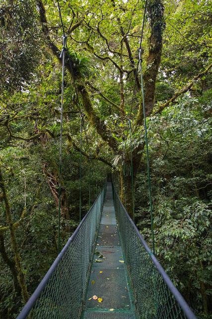 Puentes colgantes en los bosques de Monteverde, Costa Rica