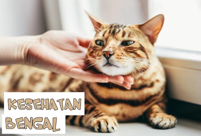Makanan Kucing Bengal