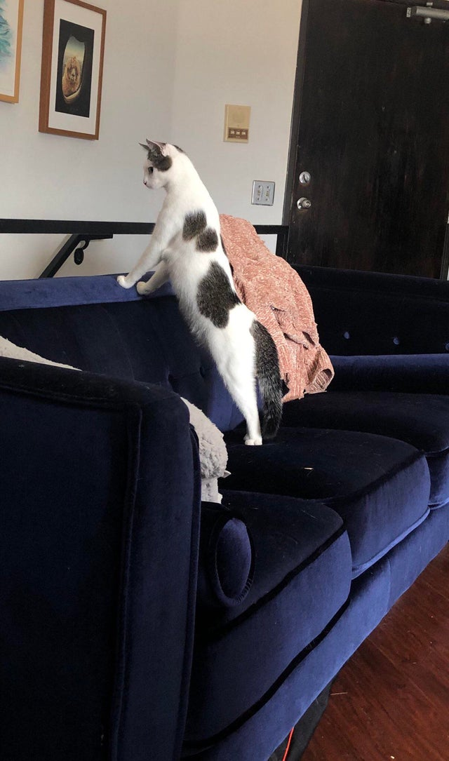 This standing cat