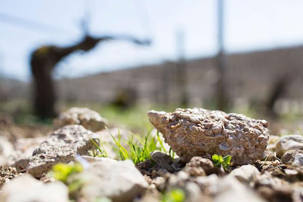 Kimmeridgian soils of Chablis