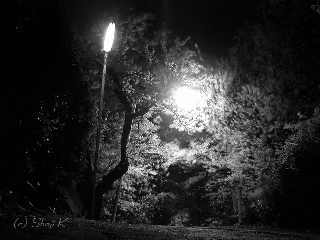 夜桜、清水ヶ丘